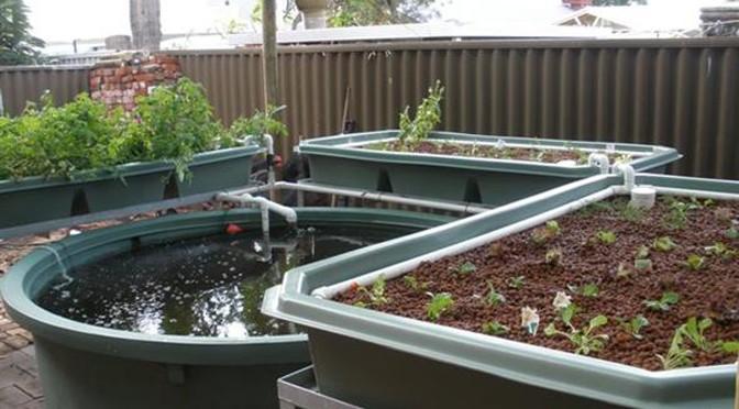 Petit système pour petite production au fond du jardin