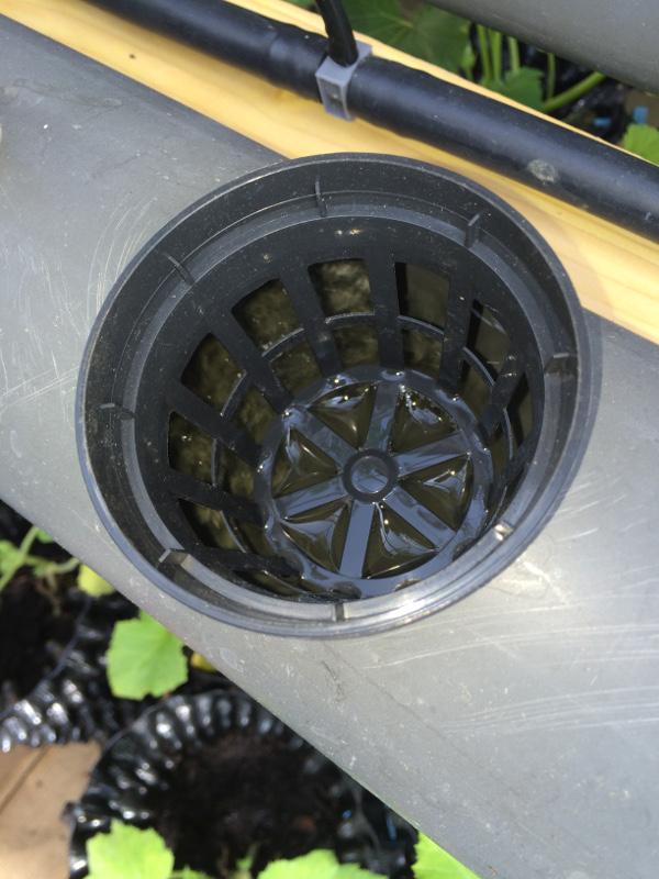 panier sur film d'eau hydroponie